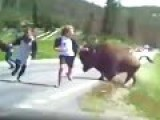 Woman's Attempt To Take Selfie With BISON Goes Very Wrong