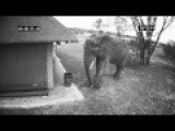 Wild Elephant Caught On CCTV Cleaning Up The Trash