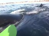 Whale Lift Kayak
