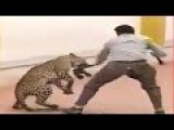 Wild Leopard Attack In Bangalore