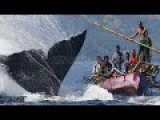 Whale Hunting Documentary