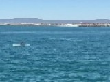 Whale Greets Paddle Boarder In Spectacular Fashion