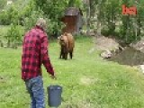 Wrestling A 600kg Grizzly Bear