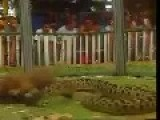 Weasel VS Snake, Spectator Sport Somewhere