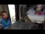 Wild Kangaroo Comes To Visit