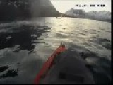 Whale Collision Gives Norwegian Kayaker Near Miss