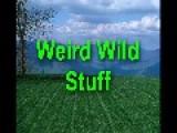 Weird Wild Stuff