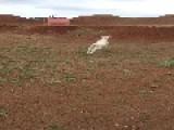 Winter The Lamb Bounces Around The Farm