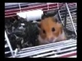 What The Hamster Ate?