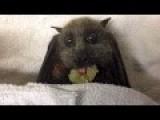 Who Hates Bats?