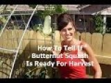 When To Harvest Butternut Squash