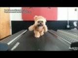 Watch A Dog Dressed As A Bear Run On A Treadmill