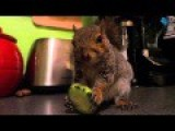 Wally The Squirrel : Eating Healthy!