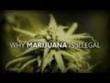 Why Marijuana Is Illegal - Joe Rogan