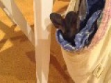 Wallaby Joey Starts To Worry After Losing Her Dummy