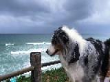 Wind Blows Through Dog's Hair
