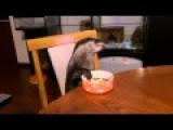 Watch This Otter Eat In The Most Well Mannered Way Will Make Your Day