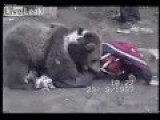 Young UFC Fighter Khabib Numagomedov Wrestling With A Bear!