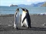 You Will Never See Anything Less Manly Than A Penguin Fight