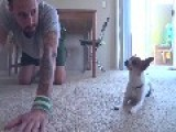Yoga Time With A Cute Chihuahua