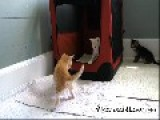 Young Kitten Plays With Brothers
