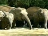 The Conservation Of Thailand&#39 S Elephants