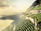 Architectural Firm Plans To Build A Cantilever Wine Museum In Lavaux