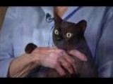 Cat Oral Care Tips