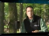 Deer Hunting Tip: How To Triangulate Deer Location With Trail Cameras