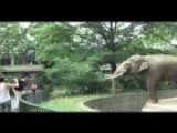 Elephant Punks Onlooker At Berlin Zoo