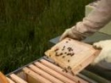How To Use A Hive Tool