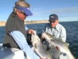Nantucket Bluefish Sport Fishing