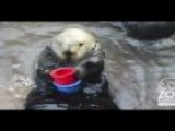 Nellie The Otter Cleans Up After Messy Trainer