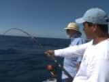 Striped Marlin Fishing In East Cape, Mexico