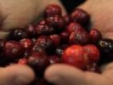 Thanksgiving Tips: Cooking With Fresh Cranberries