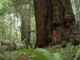 Visit The Tall Trees Grove In Redwood National Park, California