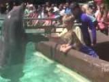 Visit SeaWorld San Diego Like A VIP