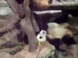Panda Drink