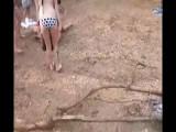 Bikini Brawl