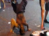 Dog Humping Break Dancing Dwarf