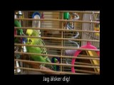 Disco The Amazing Talkative Parakeet!