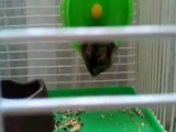 Hamster Paratrooper