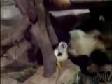 Nasty Panda Wake Up Call