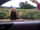 Polite Bear Waves To Car Passenger