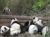Panda Flip