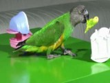 Parrot Want To Be A Mommy