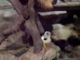 Scumbag Pranster Panda