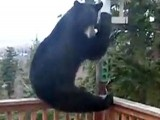 Throwing A Banana At A Bear?!