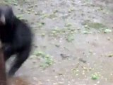 Thunder Scares The Crap Out Of Bear