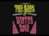 Winter Rose By A Band Of Bees